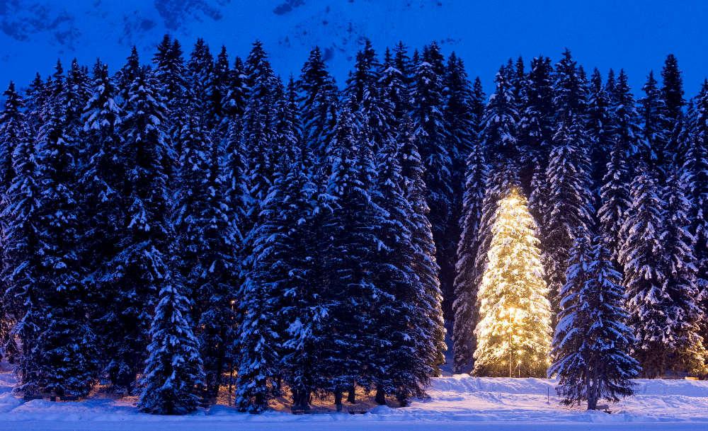 Rboles de navidad naturales o artificiales el regional - Arboles artificiales navidad ...